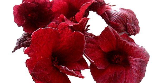 Hibiscus Flower Tea Hibiscus Tea Hibiscus Flower Tea Flower Tea