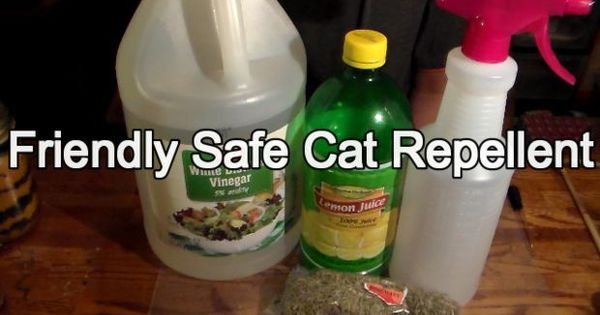 Friendly But Effective Cat Repellent Vinegar