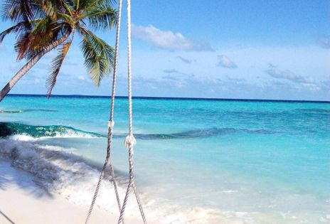 A swing on the beech. What a happy place. I'd love to