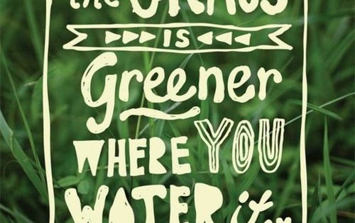 | Quote | The grass is greener where you water it. |