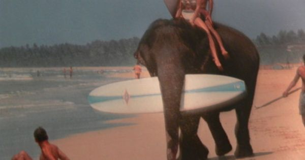 Beach Boy Elephants Girl Surf Best Way To Get Your Boards Down To The Beach Haha With Images Surfing Elephant Sup Surf