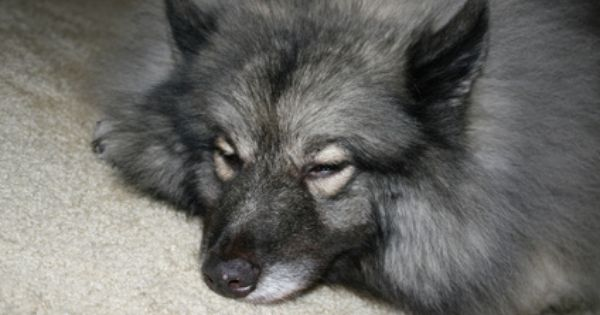 Difference Between Seizures Amp Stroke In Dogs Seizures