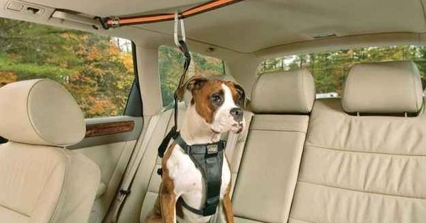 I love animals but seriously?!?!? Get that dog off my leather seats!!!
