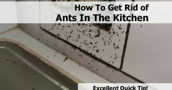 how to get rid of ants in the kitchen home pinterest