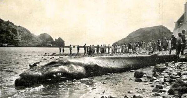 عام 1930 تفاجأ سكان كريتر بخروج حوت ضخم في ساحل الرزميت الخليج الأمامي لكريتر وتظهر في الخلفية جزء من صيره وهذه تعتبر سابق Historical Events Coast Arabian Sea