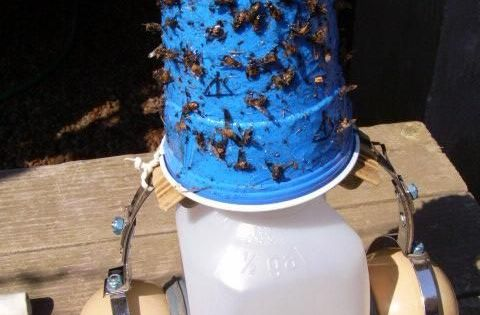 Deer Fly Traps Painters Tape Fly Traps And Blue Plates