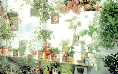 Tin can garden. Not a potting bench, but a very devoted and