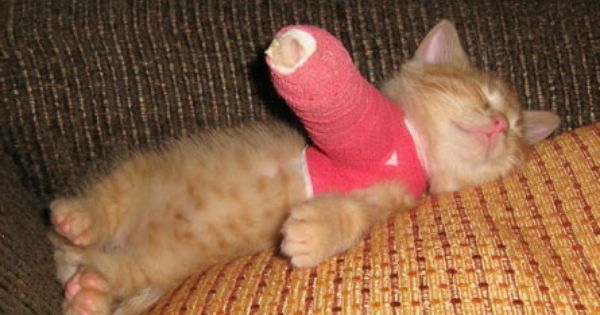 melt my heart :') kitten in a cast. Poor kitty cat