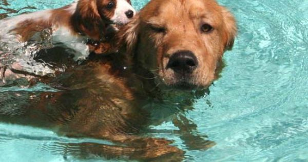 #cute swim pets dogs friends