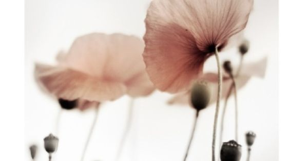 sylvia plath poppies in july essay