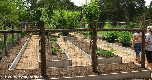 How to maximize planting in a well fenced garden of raised beds.