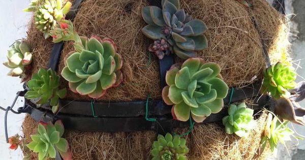 Plantes grasses en boule suspendre id e de d co jardin for Deco jardin plantes