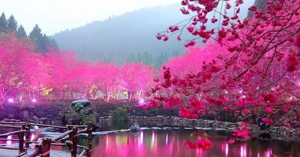 Cherry Blossom Lake, Sakura, Japan BEAUTIFUL place!!!