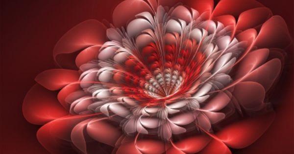 3d Fractal Art Fractal Art 3d Art Abstract Fractal Wallpaper Fractal Art Fractals Flower Images Wallpapers