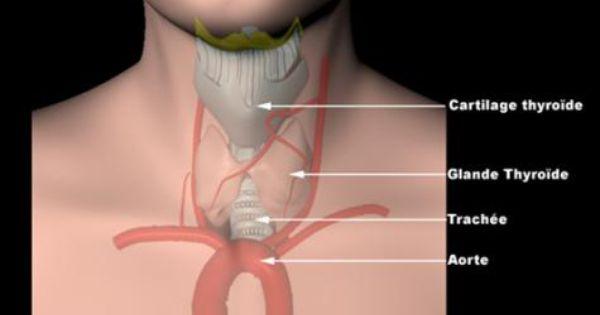 Le traitement de la hernie de la hernie intervertébrale du service lombaire