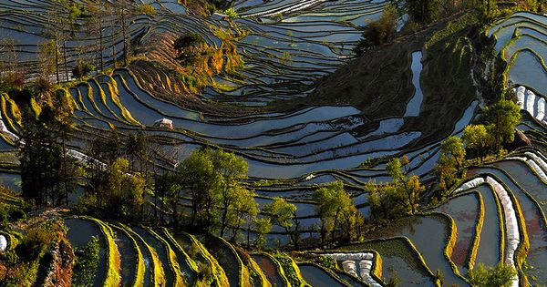 Mengzi, Honghe, Yunnan China. This looks like a Van Gogh painting with