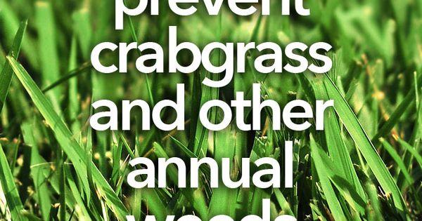 Ideas For Vegetable Gardens