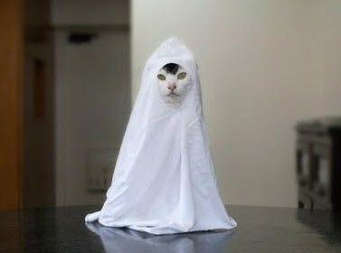 Diy Cat Ghost Costume Petdiys Com Ghost Cat Cats Cute