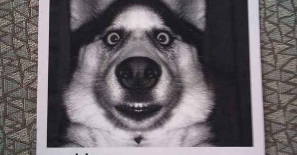 Have you seen this dog? | 26 Things That Will Turn Your