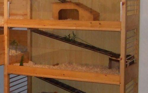 meerschweinchen eigenbau plexiglas oder kaninchendraht k fig pinterest meerschweinchen. Black Bedroom Furniture Sets. Home Design Ideas