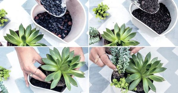 Ideas for a succulent garden these plants are so easy to for Easy to maintain bushes