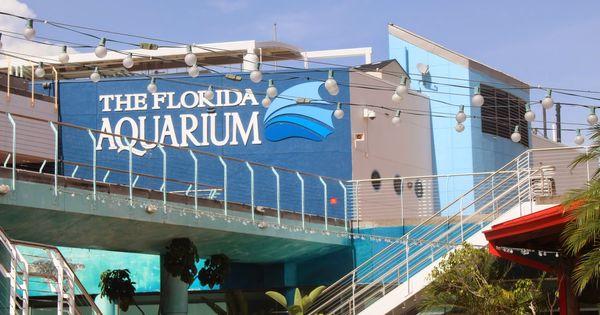 The Florida Aquarium In Tampa Florida Family Travel