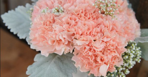 Peach Lizzy Carnations Accented With Tucks Of Baby S