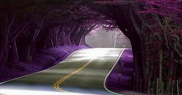 Natural Tree Tunnel, Monterey Peninsula, California... Road Trip