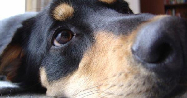 New Zealand Huntaway Unique Dog Breeds Rare Dog Breeds Popular Dog Breeds