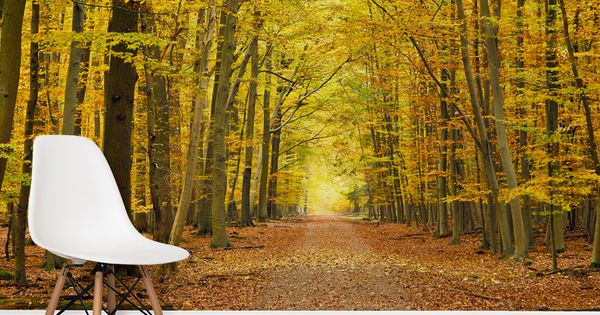 Autumn pathway tree wall mural forest wallpaper and for Autumn forest wallpaper mural