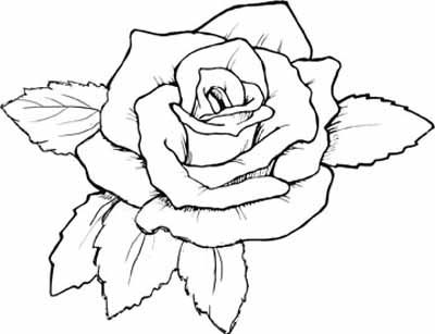 40+ Rose Coloring Book Page Free