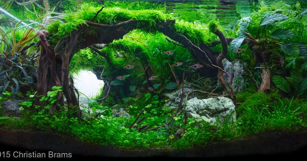 Aquascaping, Lektor and Fotos on Pinterest