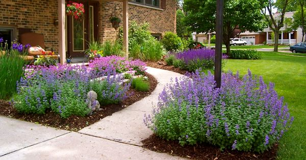 Colorful front entry perennials nepeta iris salvia for Colorful low maintenance perennials