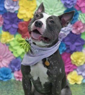 Ramona Located In Philadelphia Pa Has 1 Day Left To Live Adopt