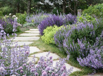 lavande dans l 39 entr e de la maison jardin d 39 ornement garden deco pinterest jardins. Black Bedroom Furniture Sets. Home Design Ideas