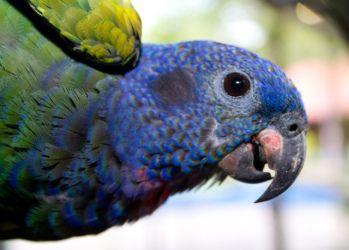 5 Best Pet Birds For Kids Best Pet Birds Pet Birds Birds For Kids
