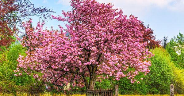 Duda sobre arboles chinos o japoneses taringa jardin for Arboles jardin japones