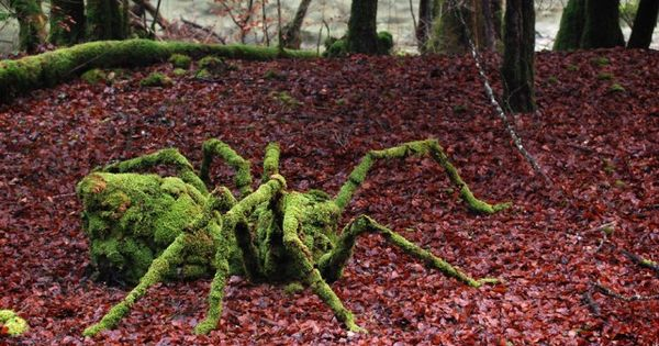 Old Moss Female Secret Garden | Transcendental Nature shared Old Moss Woman's