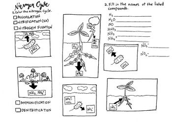 Nitrogen Cycle Coloring Sheet And Labeling Nitrogen Cycle