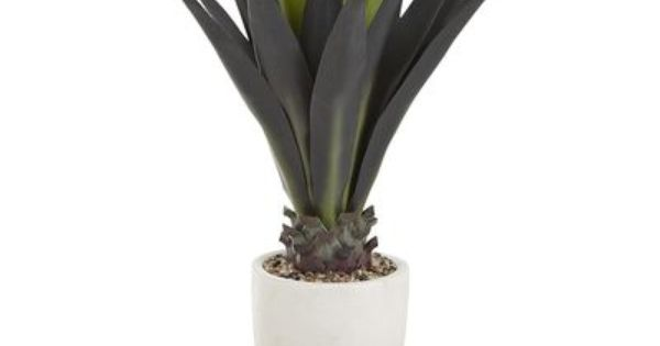 Agave plant, Agaves and Outdoor on Pinterest