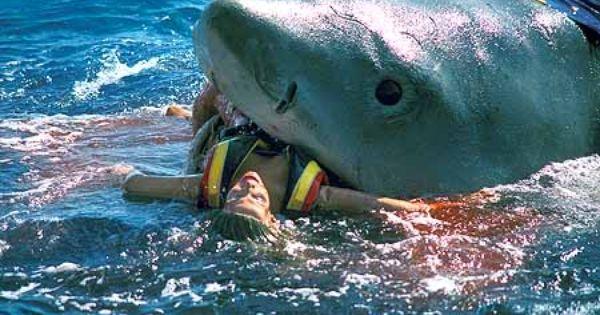 Great White Shark Eating Human | Shark eating a man in sea
