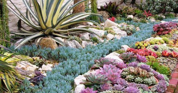 Front Yard 8 The Full Succulent Garden Designs Gardening At
