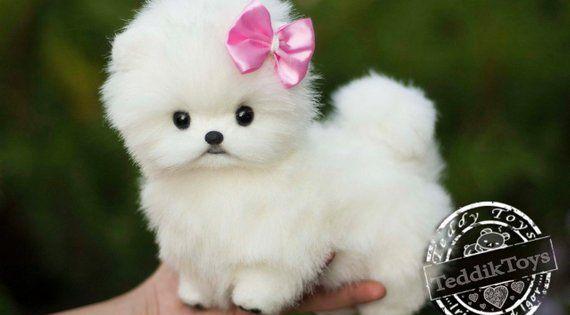 Puppy Spitz Mimi Made To Order Teddy Dog Little Spitz