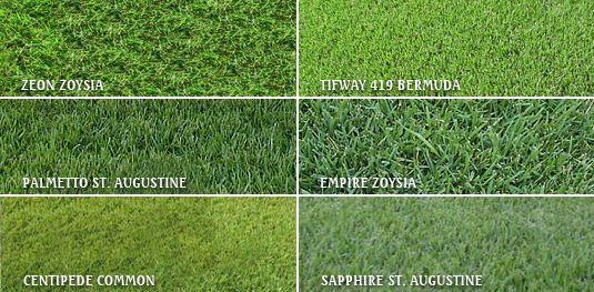 Grasses Bermuda Grass Lawn Grass Types Zoysia Grass