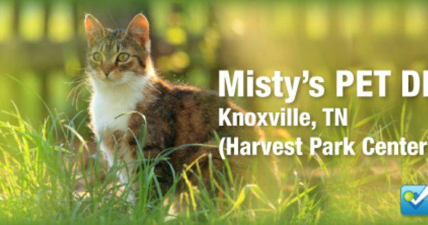 Misty S Pet Depot Knoxville Tn Natural Holistic Pet Food