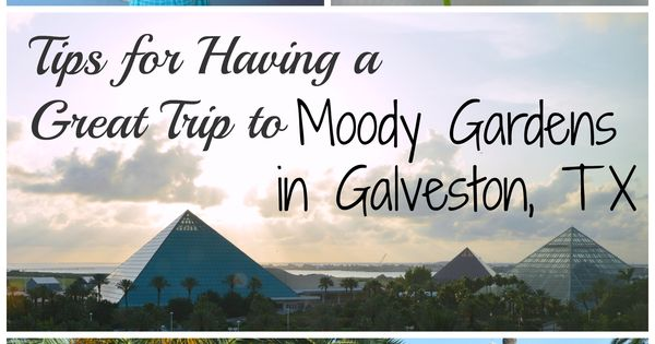 Moody gardens coupon code