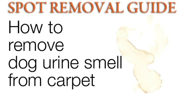 how to remove dog urine smell from carpet remove urine smell from carpet home pinterest. Black Bedroom Furniture Sets. Home Design Ideas
