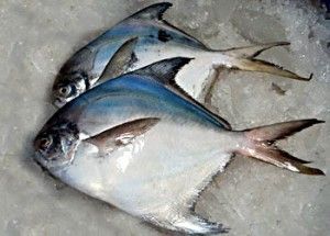 Pomfret Fish Pomfret Fish Pomfret Fish Curry