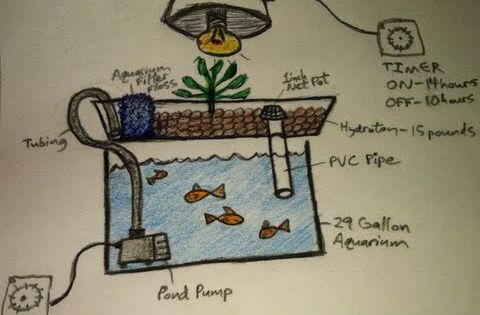 DIY Aquaponics, Aquaponics for Dummies, The Easiest DIY Indoor Aquaponics System, How