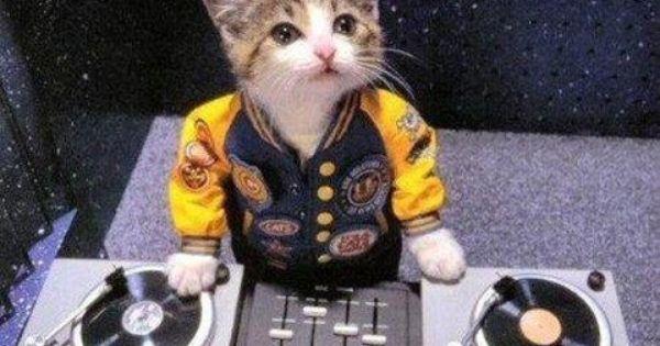 Cat Dj Katten Grappig Dj